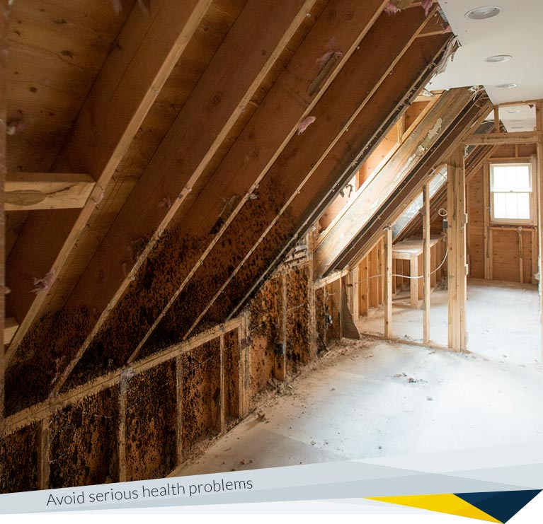 About Us | FDP Mold Remediation