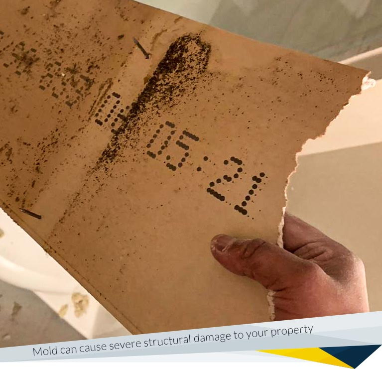 Mold Removal vs. Mold Remediation: What's the Difference?